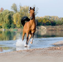 horslyx_horse_water