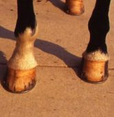 hooves-300x300