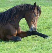 horse-2100413_1920